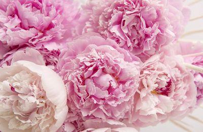 Passion fleurie