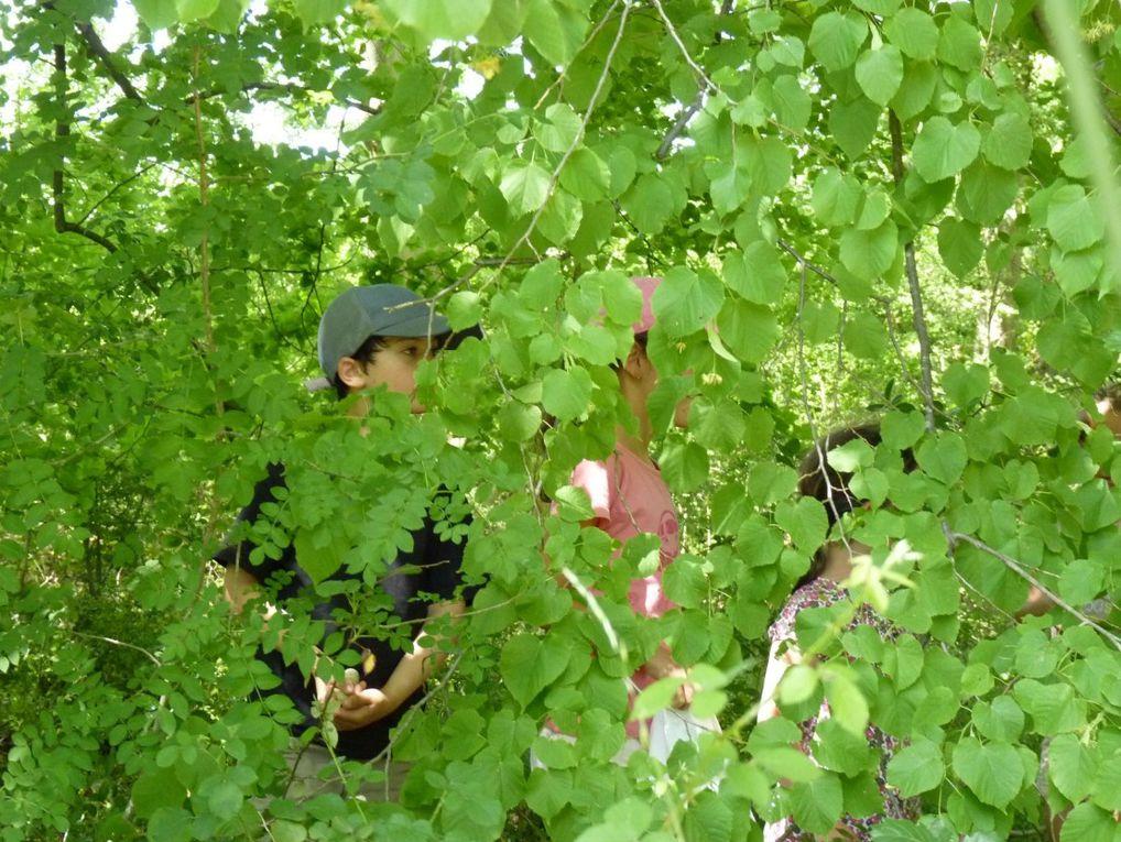 Dernière sortie de la saison pour les jeunes naturalistes de Leins-Gardonnenque