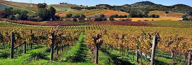 The Vineyard of California
