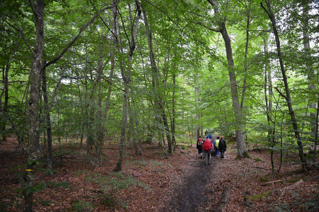 Sortie  journée Jeudi 4 août 2016  Forêt de Fontainebleau, Montigny-sur-loing