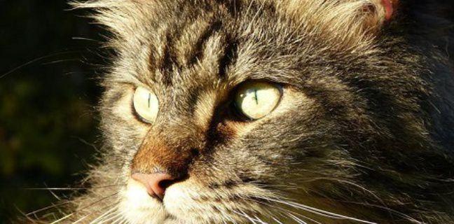 Près de 130.000 personnes réclament justice pour Jupiter, le chat tué d'une balle en pleine tête
