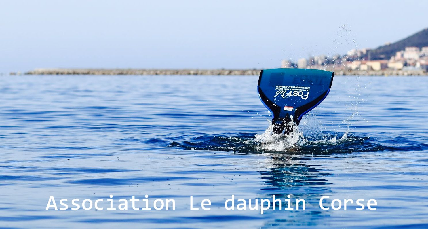 "Association ""le dauphin Corse"""