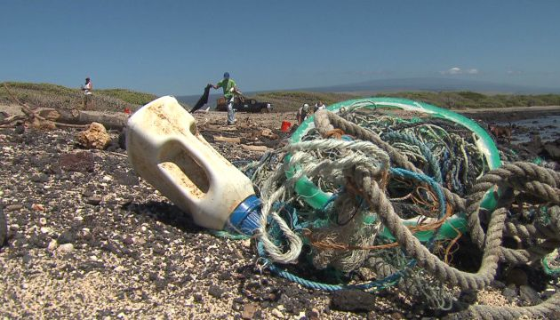 Unexpected effects of tsunami debris on Hawaii wildlife
