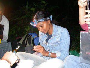Etude  des Chauves-souris de la Guadeloupe
