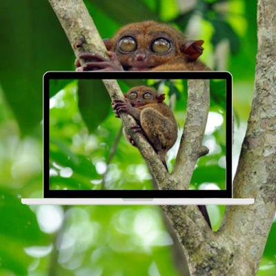 Certains des animaux les plus rares du monde se trouvent aux Philippines
