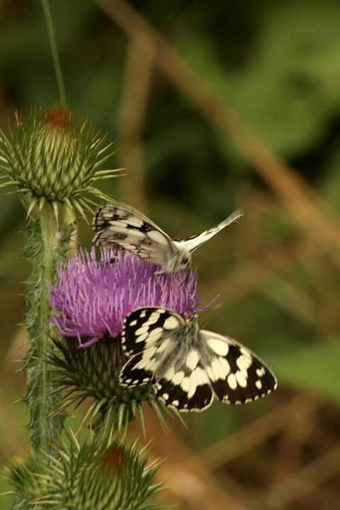 Papillons en proxy photographie