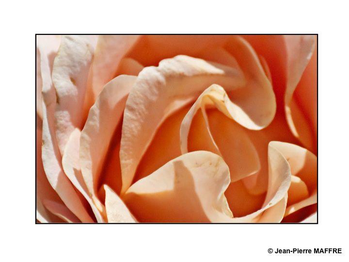 Que dire de plus sur les roses que ce qui a déjà été dit et écrit. Contentons-nous d'admirer.