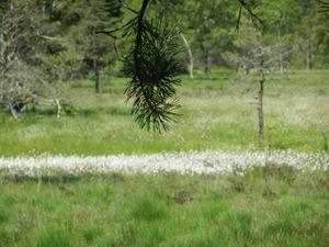 Les arbres refont leur apparition, marguerites, digitales et linaigrettes nous conduisent jusqu'à un poteau indicateur