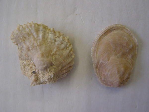 """<p>Cette région est bénie des dieux pour ses nombreux fossiles bien conservés.</p> <p>Les étages stratigraphiques rencontrés vont du Cambrien à l'Oligocène.</p> <p>Les fossiles les plus marquants ou les plus esthétiques sont repris ici.</p> <p> Bonne visite ! </p> <p> Phil """"Fossil"""" </p>"""