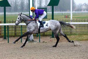 Les chevaux repérés en plat : semaine du 04/03 au 10/03