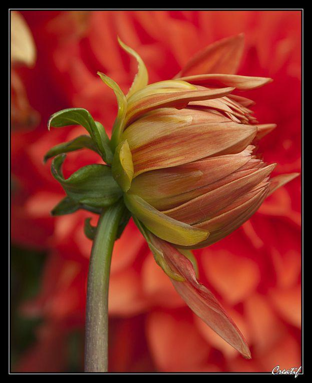 Album - fleurs--fruits---comestibles-v2