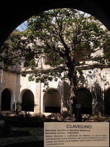 L'arbre magique de Oaxtepec