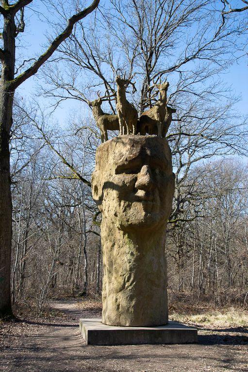 Sortie petite journée dimanche 28 février forêt de Rougeau