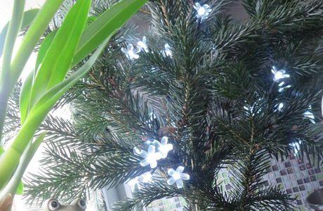 Mes arbres de Noël