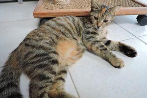 FRIPOUILLE - femelle - 1 an et demi - adoptée
