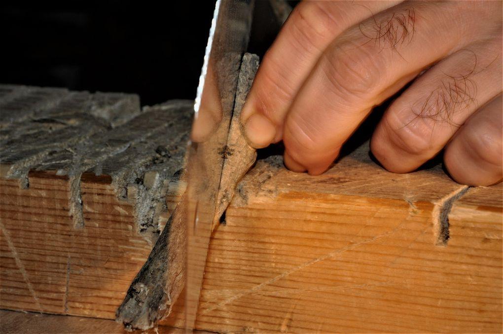 Nouveau bois, nouvelle tranche. (7 photos)