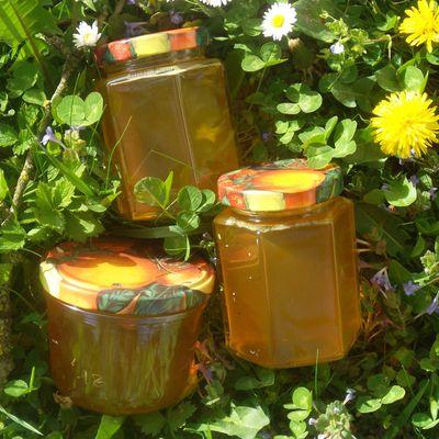 Pissenlits : faites-en tout un miel !