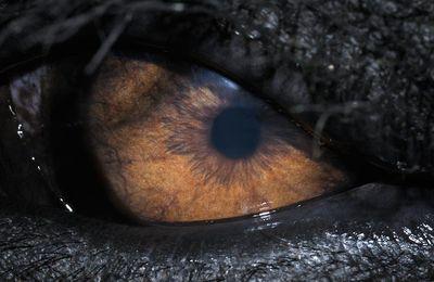 Symbole de l'œil dans la Bible : le mauvais œil et l'œil percé.