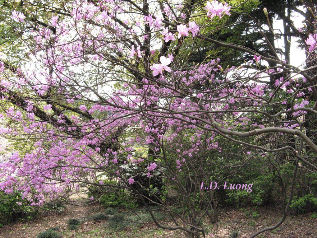 Jardin national du Japon (Tokyo)