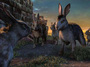 [Animation] La colline aux lapins