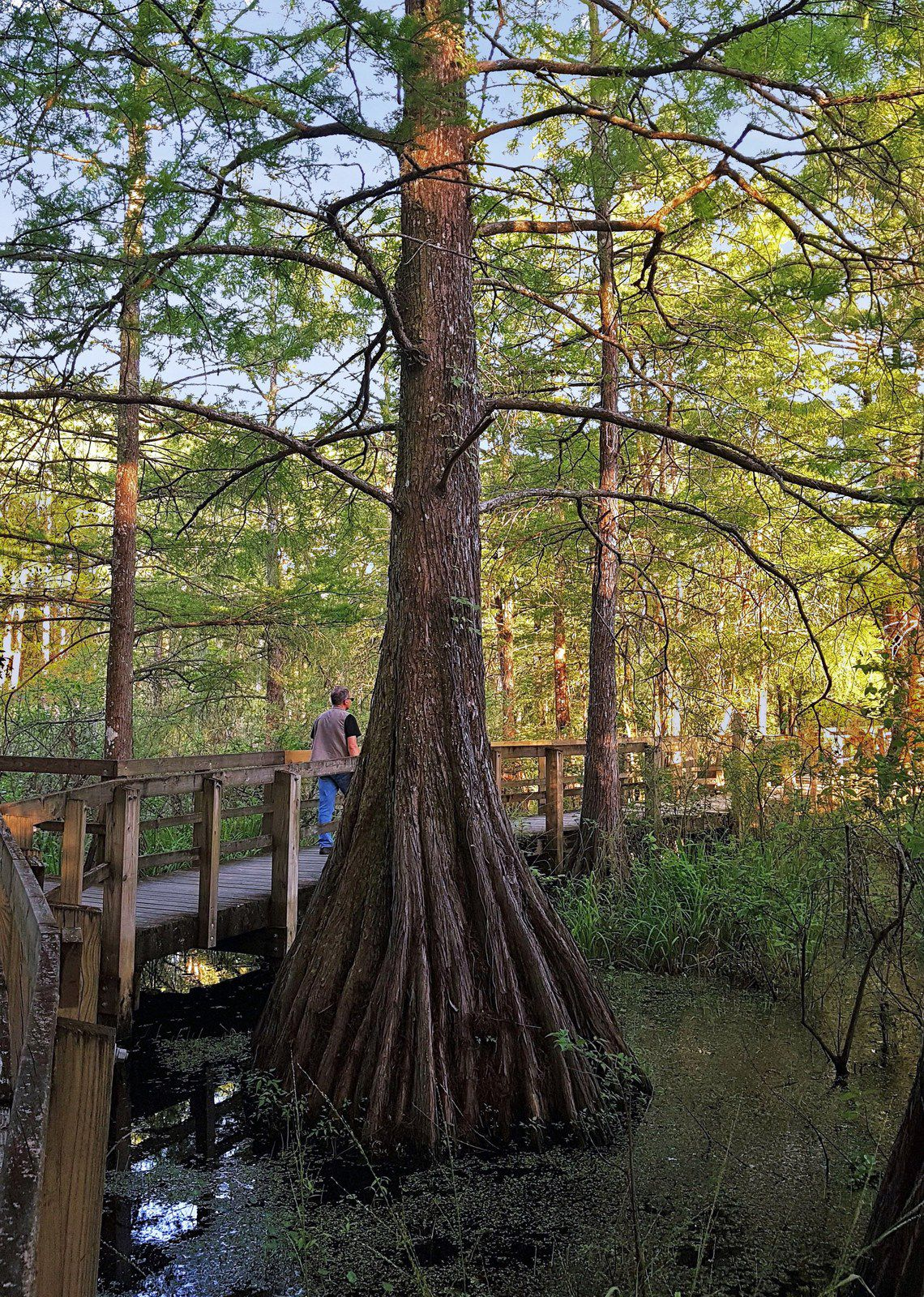 Lake St Martin Cypress Preserve boardwalk