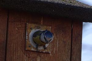 Dans la Drôme, 800 nichoirs installés pour les mésanges et les chauves-souris pour protéger les vignes