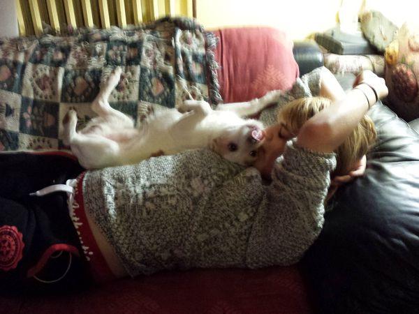 A l'adoption Tom petit chien 9 ans maltraité