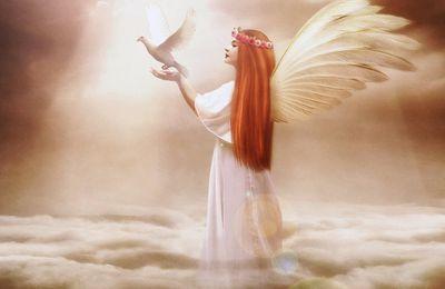 Les Anges de Février