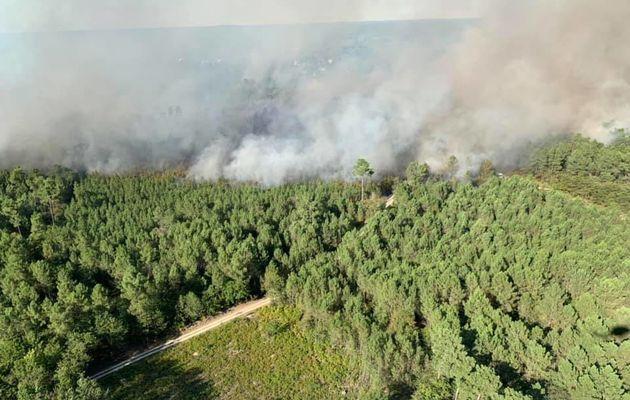 Bédenac (17) - Un violent feu de cimes mobilisent de nombreux pompiers