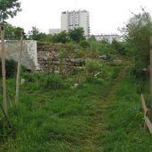 """Montreuil : Les """" murs à pêches """", un joyau fruitier et artistique oublié en plein cœur de la ville"""