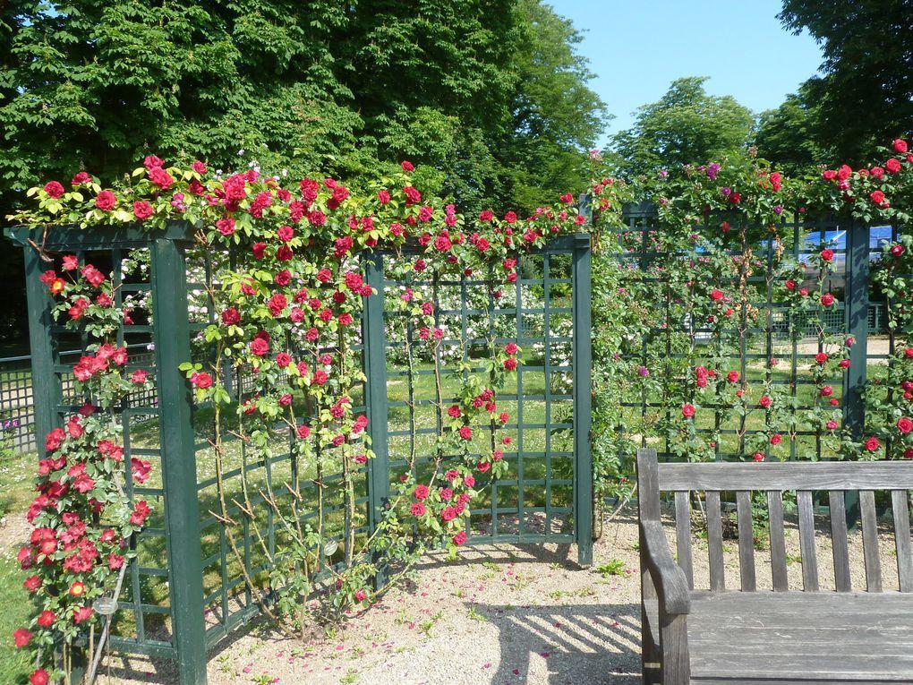La Roseraie de l'haÿ-les Roses.