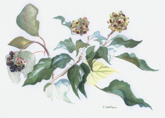 aquarelle sur papier arches 300gr