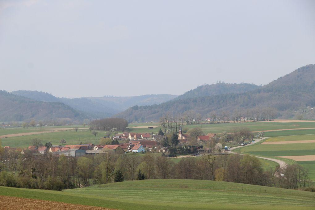 Sentier géologique du Bastberg au printemps
