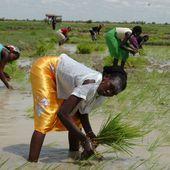 Le paysan africain, le grand oublié.... - Le Blog de Tanguy GNIKOBOU