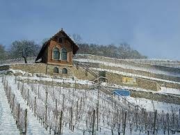 La Région de Saale Unstrut  et la Vigne