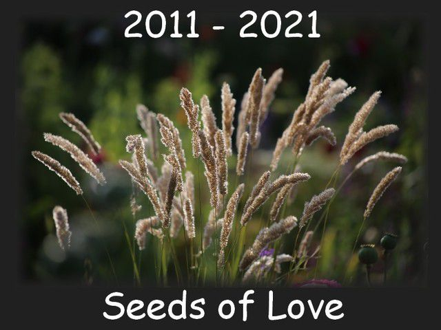 Dix ans de Seeds of Love ,
