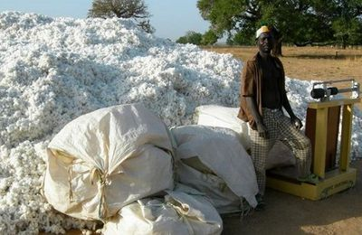 Monsanto : les semences du coton OGM appauvrissent le Burkina Faso (Osservatorio Diritti)