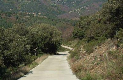 vignes au bout des pistes - vineyards at the end of the road...