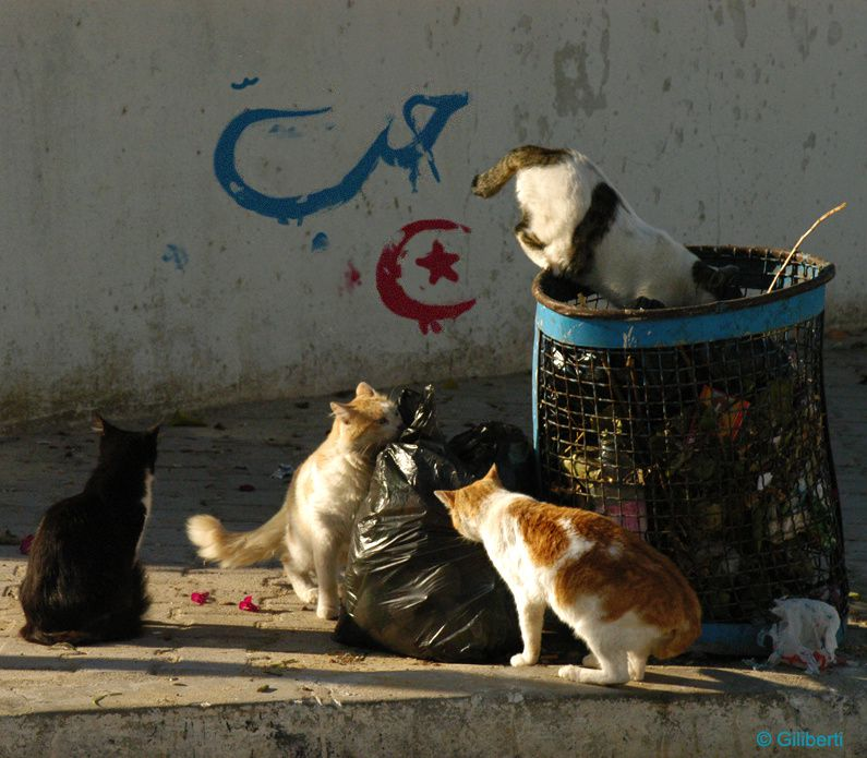 Album - TUNISIE