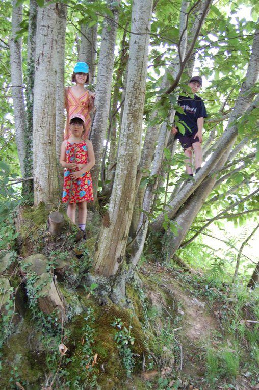 Les chênes de Pont-Veix ponctuent ou débutent avec majesté ce voyage dans le temps. Présents depuis 600 ans, les arbres de cette allée sont les témoins historiques de la vie du domaine.
