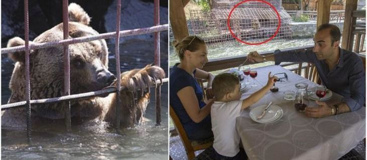 Des ours affamés supplient des gens de les nourrir pendant qu'ils sont forcés de les regarder manger