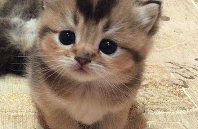 Chaton - Cute - Photographie - Picture - Free