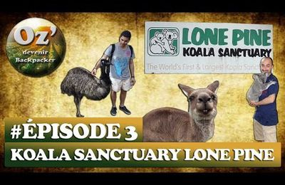 #Episode 3 - First zoo in Australia