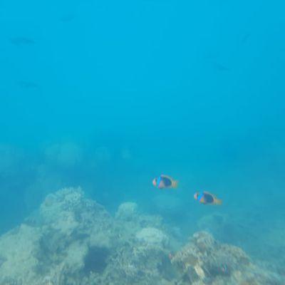 la vie dans l'océan pacifique en Nouvelle Calédonie
