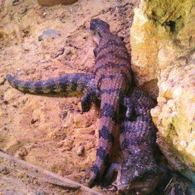 Animal sauvage : comment connaître son mode de vie, pour le soigner ?
