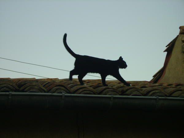 Les chats de la famille, nombreux, gâtés, coquins. Des chats quoi!