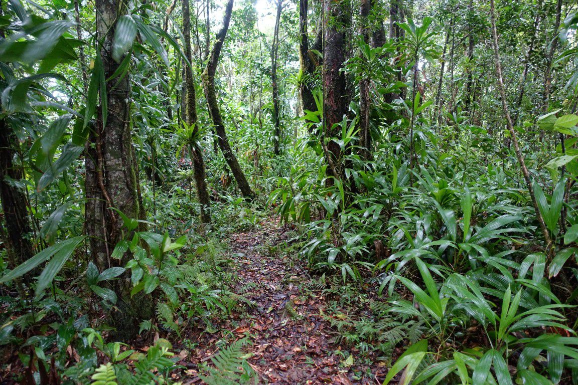 sur le sentier du Morne Piment