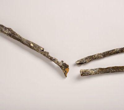 Le bras d'un pré-Néandertalien trouvé au bord de la Seine