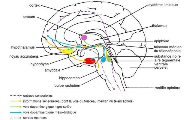 La conception biologique du plaisir