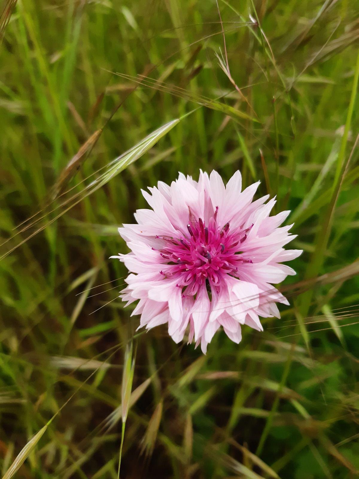 (ma main sur les photos c'est parce qu'il y avait du vent, je ne cueille pas les fleurs, bien sûr !!)